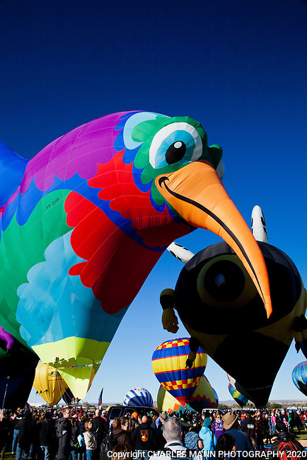 The opening day of the 2013 Albuquerque Hot Air Balloon Fiesta featured over 500 hot air balloons and  a thousands of spectators who wandered among the balloons as they began to ascend into the sky. A giant hummingbird balloon was a crown favorite.