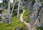 "Cypress Grove Trail at Point Lobos State Natural Reserve. Reserve originally created in 1973; expanded to State Marine Reserve (SMR) and State Marine Conservation Area (SMCA) in 2007. One of only two places where native Monterey Cypress trees can be found. Called the ""greatest meeting of land and water in the world"" by landscape artist Francis McComas. Monterey County, CA."