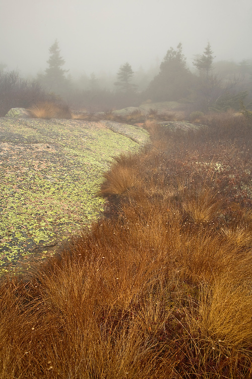 Fog at Cadillac Mountain in Acadia National Park, Maine