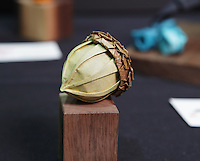 OrigamiUSA 2014 exhibition. Origami acorn designed by Beth Johnson