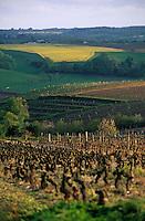 Europe/France/Pays de la Loire/49/Maine-et-Loire/Corniche angevine: Panorama sur le vignoble depuis le moulin Guérin
