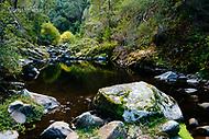 Image Ref: CA295<br /> Location: Sheoak Hike, Great Ocean Road<br /> Date of Shot: 26.04.18