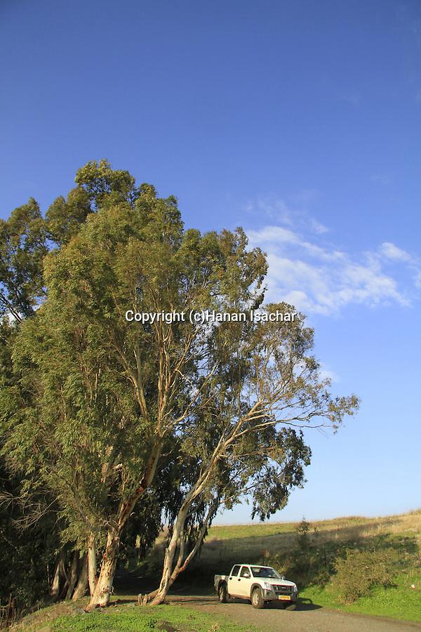 Ein Almin in the Golan Heights