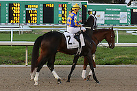 January 17, 2015: Tiznow R J (FL) with Robby Albarado in the Lecomte Stakes at the New Orleans Fairgrounds course. Steve Dalmado/ESW/CSM