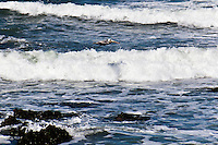 A Brown pelican casts a shadow on the waves as it flies along the California coast at Pigeon Point Light Station State Historic Park south of San Francisco.