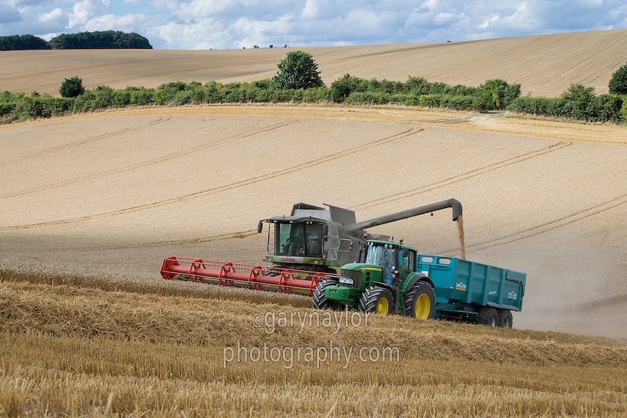 Harvesting winter wheat with Claas Lexion hillside combine - September, Lincolnshire Wolds