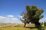 Tel Ziph