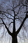 BOTANICALS   TREES