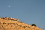 The Golan Heights. Hurvat Kanaf, remains of a Jewish village from the 6th century overlooking the Sea of Galilee
