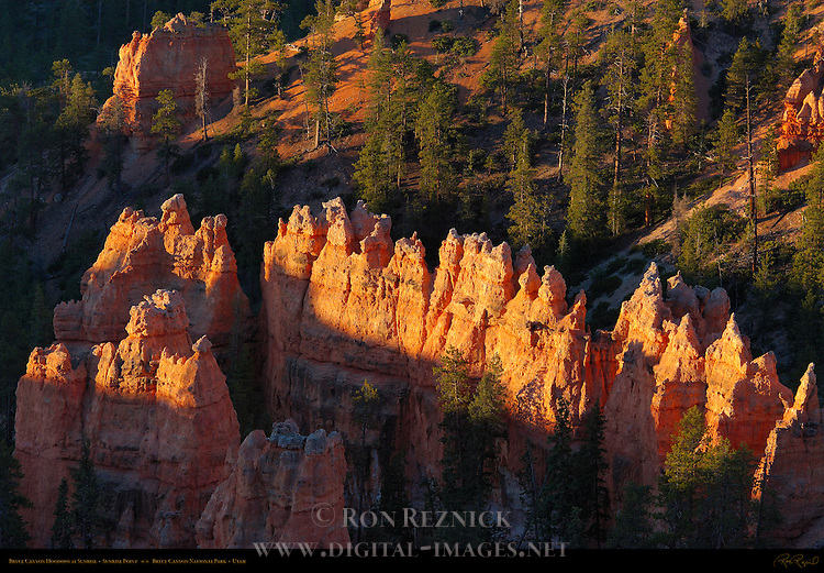 Bryce Canyon Hoodoos at Sunrise, Sunrise Point, Bryce Canyon National Park, Utah