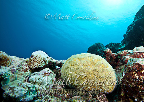 Coral Ball, Yap Micronesia (Photo by Matt Considine - Images of Asia Collection) (Matt Considine)