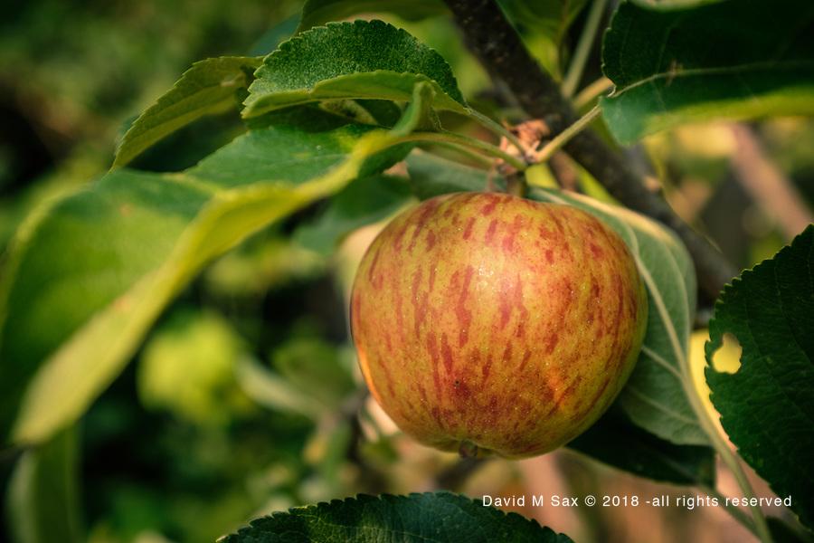 8.6.17 - Un Apple...