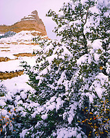 Snowcovered Juniper & Bluff,  Oregon, California & Mormon Pioneer Trails, Scotts Bluff National Monument, Nebraska