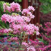 Gisela, FLOWERS, BLUMEN, FLORES, photos+++++,DTGK2062,#f#