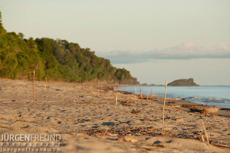 Leatherback turtle nesting sites with stick markers on the sand.