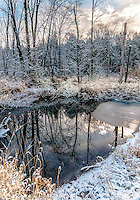SUBJECT: Winter scene  IMAGE: Still waters reflect surrounding trees and sky in a wintery landscape with a skim of ice and snow-laden branches.