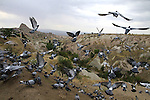 Images of Turkey. Pigeon Valley. CAPPADOCIA