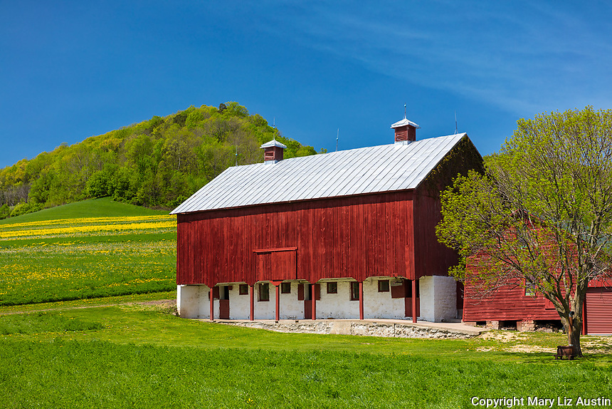 La Crosse, County, WI: Red and white barn, German-Swiss style, in spring