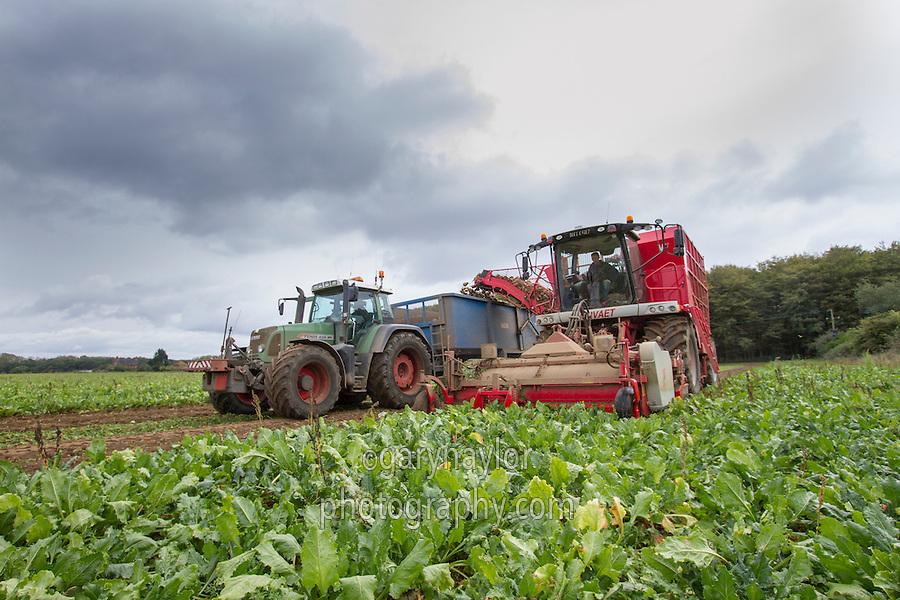 Harvesting sugar beet with Varvaet 617