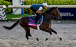 January 24, 2020: Sacred Life gallops as horses prepare for the Pegasus World Cup Invitational at Gulfstream Park Race Track in Hallandale Beach, Florida. John Voorhees/Eclipse Sportswire/CSM