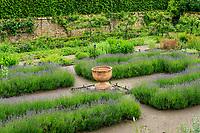 France, Loiret ('(), La Bussière, jardin du château de la Bussière, le potager, carré de lavandes