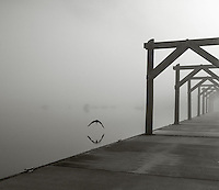 Vashon Island, Washington:<br /> foggy morning at Dockton Marina County Park
