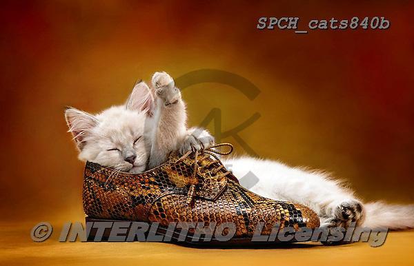 Xavier, ANIMALS, REALISTISCHE TIERE, ANIMALES REALISTICOS, cats, photos+++++,SPCHCATS840B,#a#