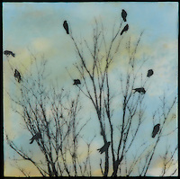 Encaustic painting with photography and mixed media of birds on branch in blue sky.