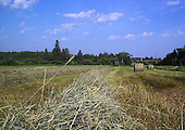 Farm tractor pulling round baler in field making round bales of hay, to be used to feed cattle. row of hay waiting to be baled
