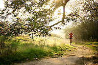 Man running on tree lined trails with golden sunlight.