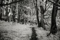 IR Forest