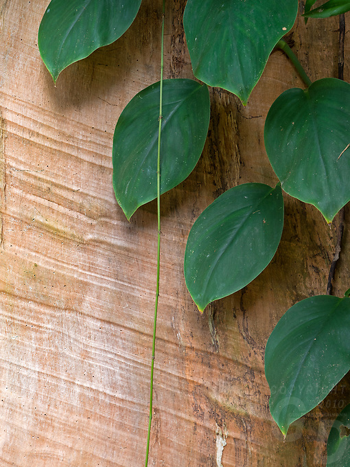 Vegetation; wood and bark, Cambodia