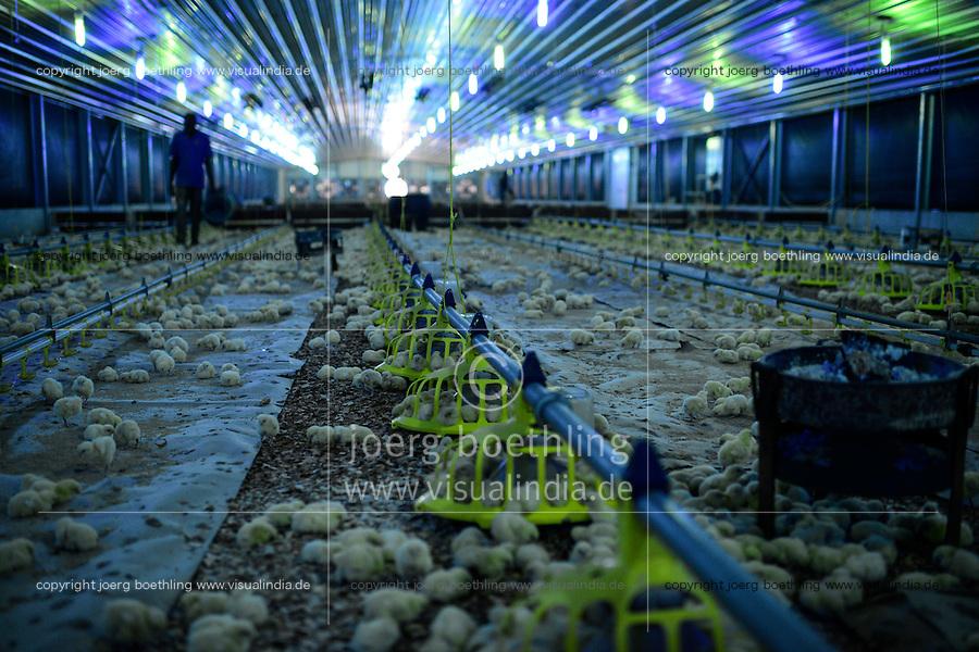 NIGERIA, Oyo State, Ibadan, Sayed farm a industrial chicken farm by lebanese investors, annual production of 1.6 billion broiler with the barnd name Fiesta for supermarkets like shoprite, a special lightening is used to control the day cycles of the chicks for optimum and fast growth / industrieller Huehnermastbetrieb Sayed Farm von libanesischen Investoren, Produktion von 1,6 Mio Broilern pro Jahr, Aufzucht von Brathaehnchen, Broiler der Marke Fiesta fuer Verkauf an Supermaerkte wie shoprite