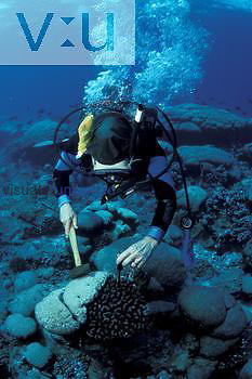Scientist studying the effects of El Nino events on coral health and growth, Clipperton Island, Eastern Pacific Ocean.