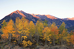 Morning Light on Twin Peaks above autumn aspens, San Isabel National Forest, Colorado