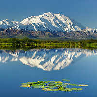 Mt. Denali reflects in a small tundra pond in Denali National Park, Alaska