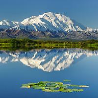 Mt. Denali reflects in a small tundra pond in Denali National Park, Alaska