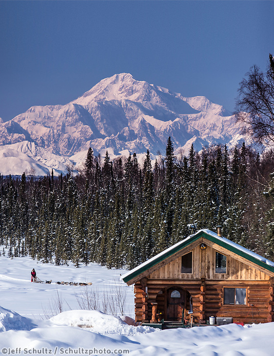 Dog musher Martin Buser runs his team during a spring training run on a lake with Mt. Mckinley and Alaska Range in the background and log cabin in foreground.   Southcentral, Alaska<br />