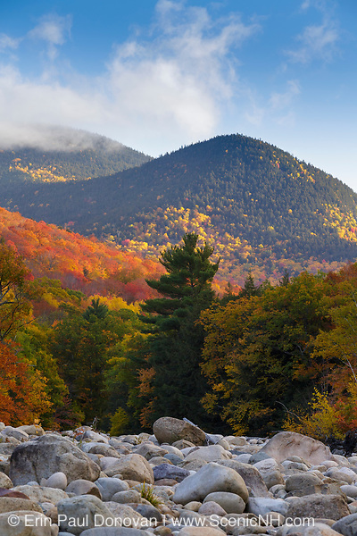Autumn foliage on Potash Knob from along the East Branch of the Pemigewasset River in Lincoln, New Hampshire during the autumn months. This location is just above the site of the old 1900s Gravity Dam that was linked to the Lincoln Mill era.