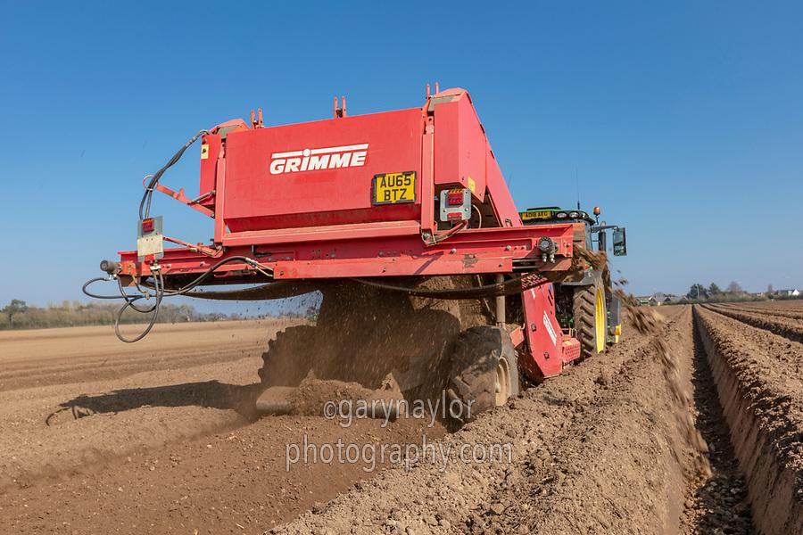 Destoning for potato planting - Norfolk, March