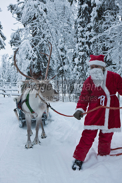 Europe/Finlande/Laponie/ Env de Levi: Le Pêre Noël et son traineau à Levin Lapinkylä est une ferme traditionnelle le long de la Ounasjoki -ou on élève des  rennes