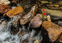 Indian Paintbrush and Creek