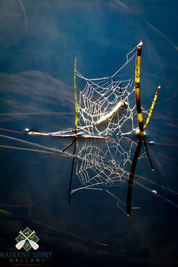 &quot;Web Reflection&quot;<br /> <br /> The dew-adorned web of a long-jawed orbweaver spider (Tetragnatha species) casts a sparkling reflection on the river when kissed by the light of golden hour. North Kawishiwi River in Boundary Waters Canoe Area Wilderness (BWCAW).