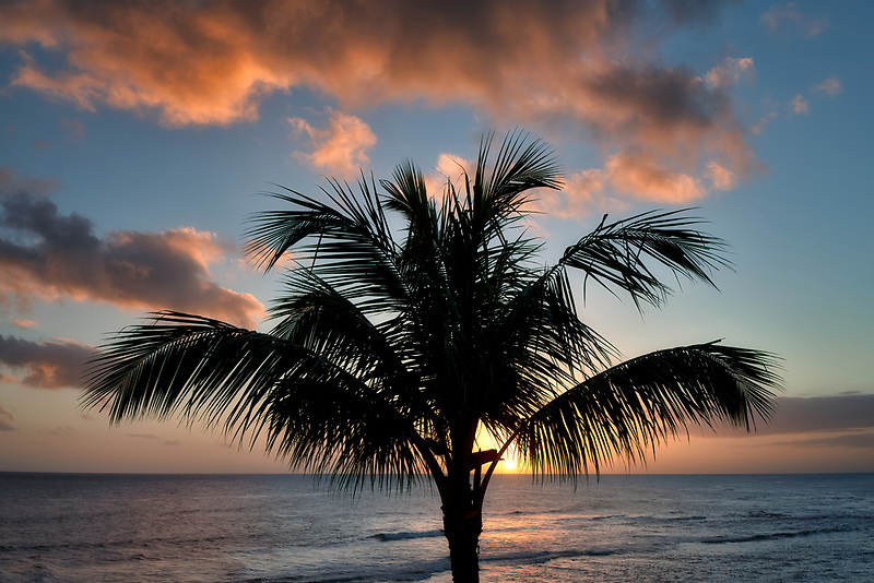 Sunset with palm tree. Poipu, Kauai, Hawaii
