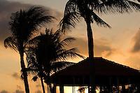 02.2012 Playa del Carmen (Mexico)<br /> <br /> Coucher de soleil sur les palmiers.<br /> <br /> Sunset over the palm trees.