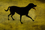 A silhouette of a short haired dog