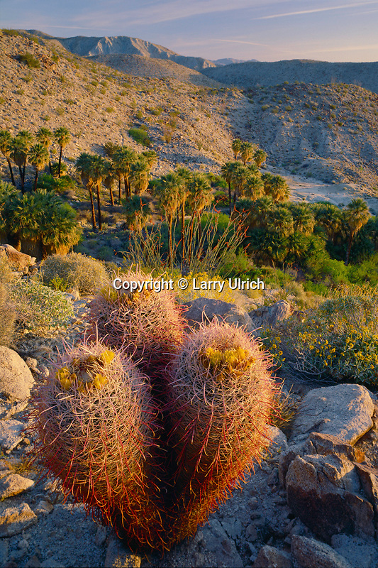 California barrel cactus and California fan palms<br />