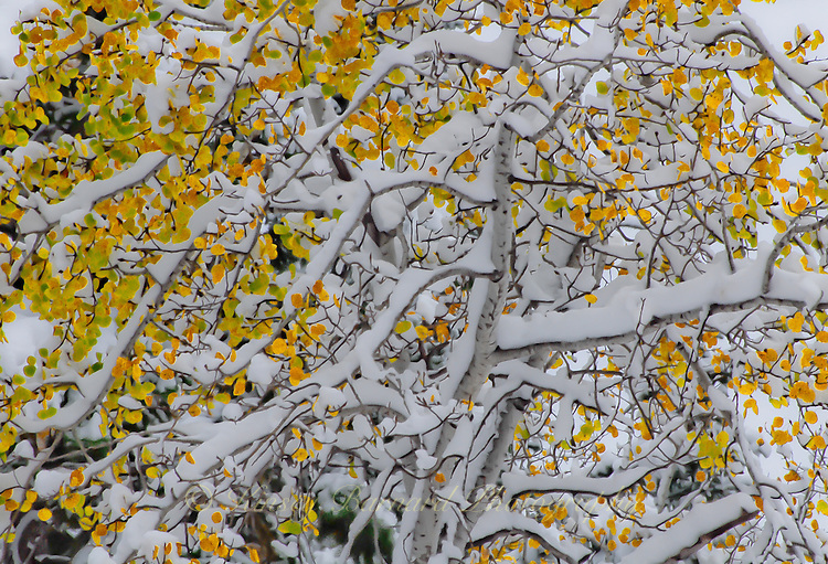 &quot;SEASONS COLLIDE&quot;<br />