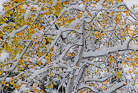 """SEASONS COLLIDE""<br />