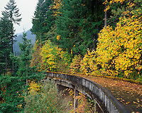 Old Columbia River Highway near Eagle Creek  in Columbia River National Scenic Area